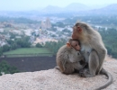 Monkeys watching the Sunset over Hampi