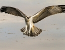 Osprey approach