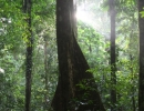 Pristine Forest, Peucang, Indonesia