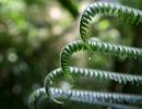 Fern, Costa Rica